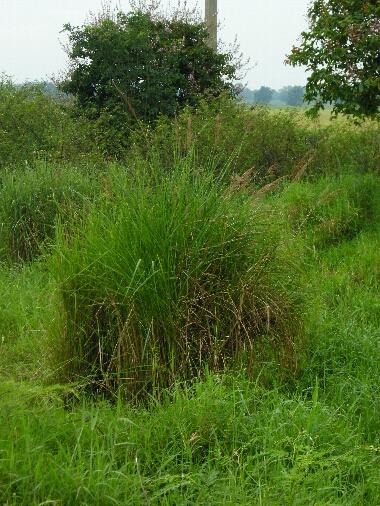 Grass7_2
