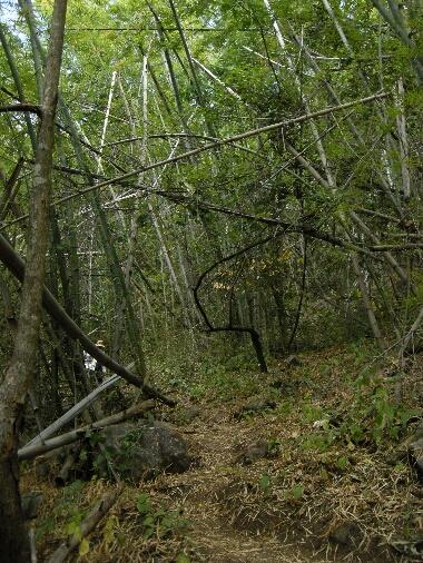 Phaman_trail